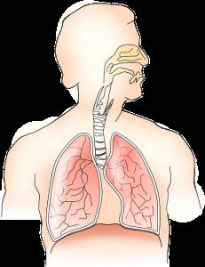 anatomy-145696_640