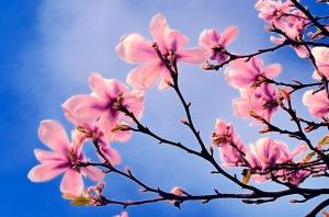 spring-70465_640